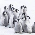 Marsz pingwinów – druga część oskarowego megahitu